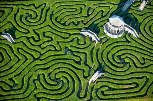 longleat-hedge-maze-86