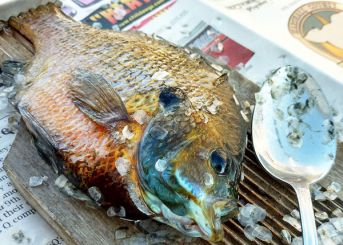 ScaleFish