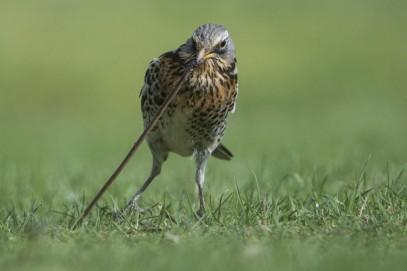 bird-worm